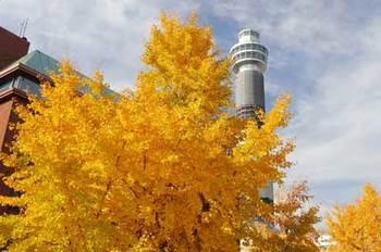 yamashita_PC131591small.jpg